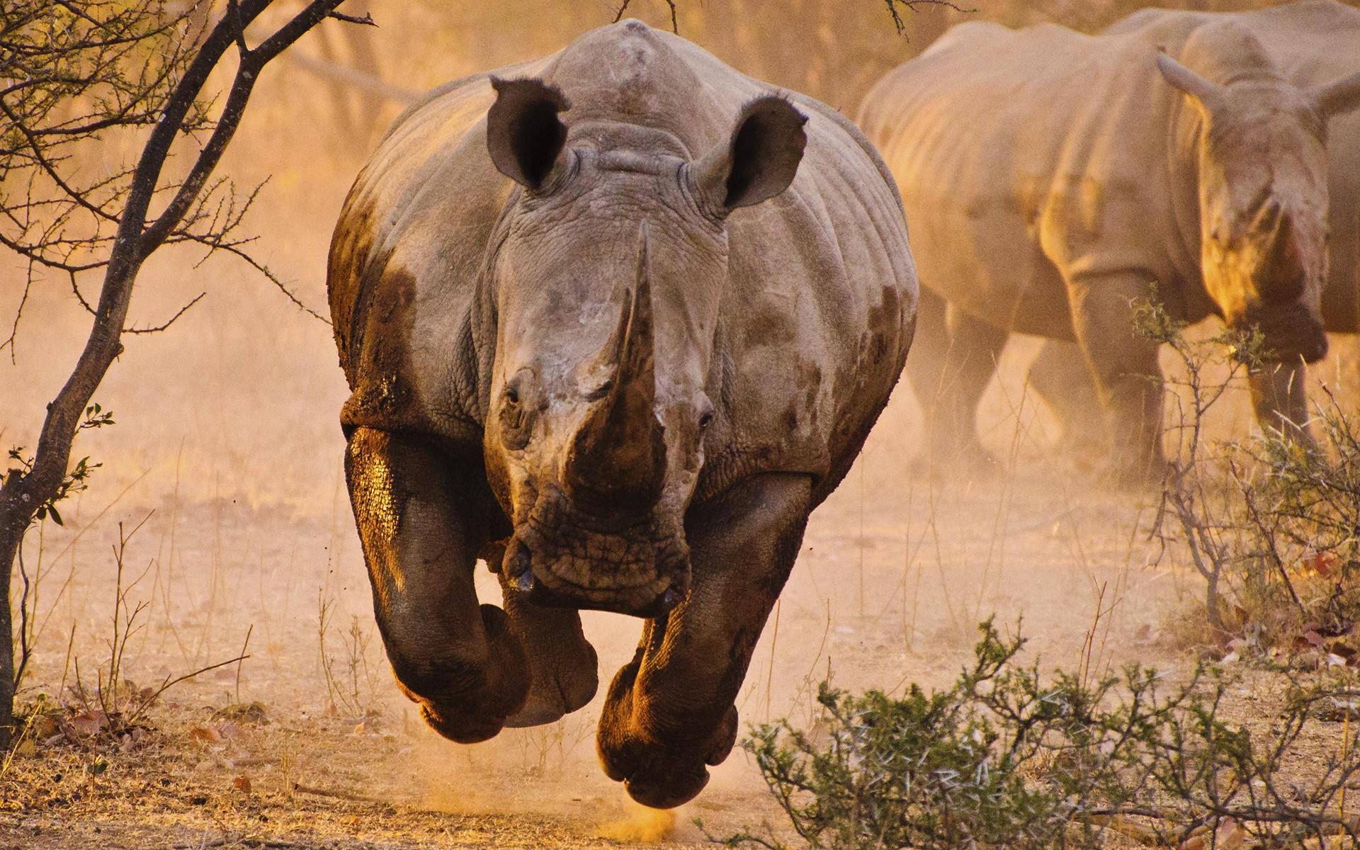 Devenez Un Rhinocéros – Les 5 obstacles de l'entrepreneur