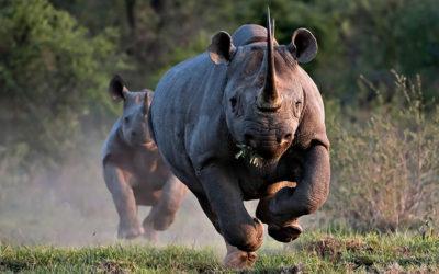 Devenez un Rhinocéros – Les 5 obstacles de l'entrepreneur (partie 5)