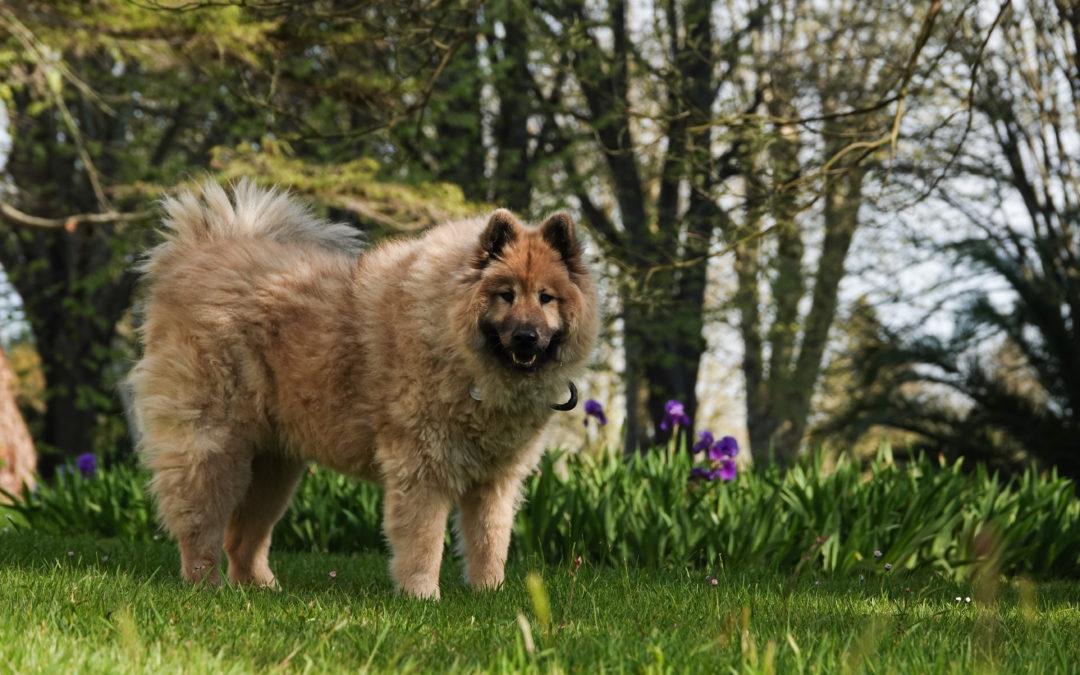 chien loup liberté conscience amour