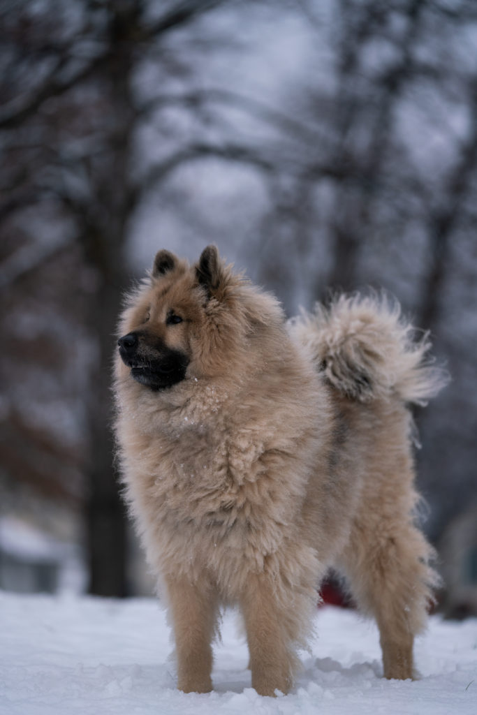 chien photographie dog photographer pays basque
